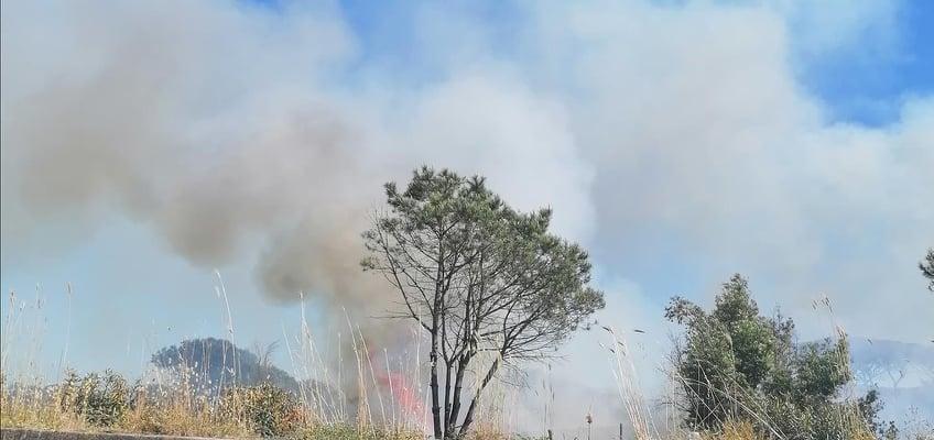 Brucia la pineta di Castel Fusano: vigili del fuoco sul posto (VIDEO) 3