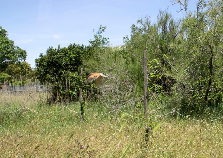 Alla Lipu di Ostia, liberato un gheppio nella Giornata mondiale degli uccelli migratori (VIDEO) 2