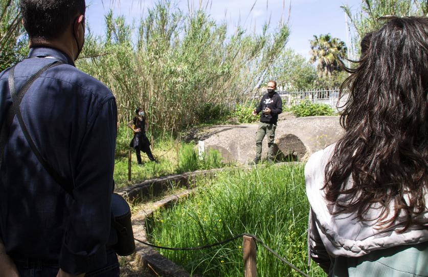 Alla Lipu di Ostia, liberato un gheppio nella Giornata mondiale degli uccelli migratori (VIDEO) 1