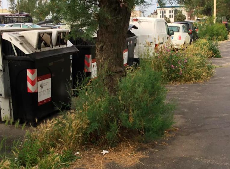 Ostia Ponente, effetto savana: marciapiedi sommersi da erbacce e rifiuti 1