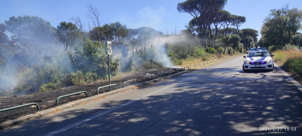Brucia la pineta di Castel Fusano: vigili del fuoco sul posto (VIDEO) 4