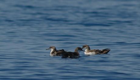 Ladispoli, strage di uccelli a Torre Flavia: sospetti su un'alga tossica 2