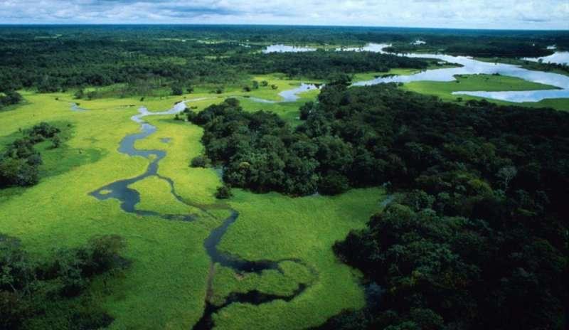 disboscamento illegale 2021