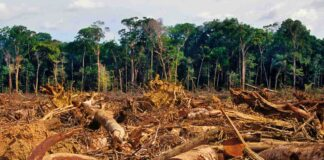 disboscamento illegale