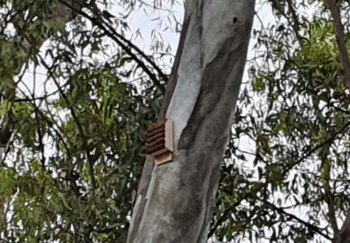 pipistrelli fiumicino zanzare