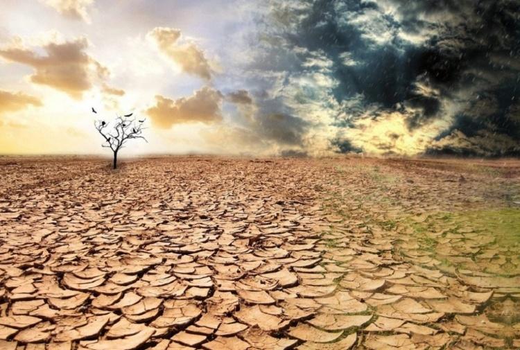 rigenerazione foreste