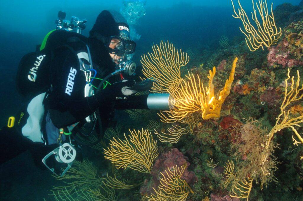 Ostia, un aereo sommerso diventa meta turistica dei subacquei (VIDEO) 2