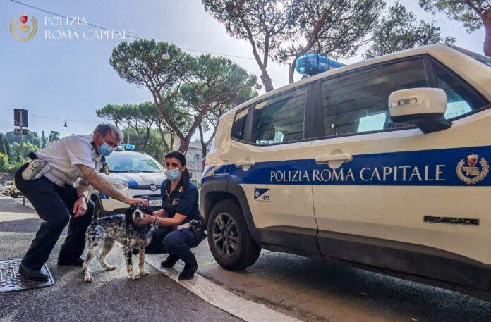cagnolina salvata polizia locale