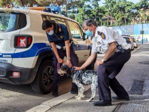 Vagava spaventata sul lungotevere, cagnolina salvata dalla Polizia Locale 1
