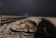 tartaruga uova notte