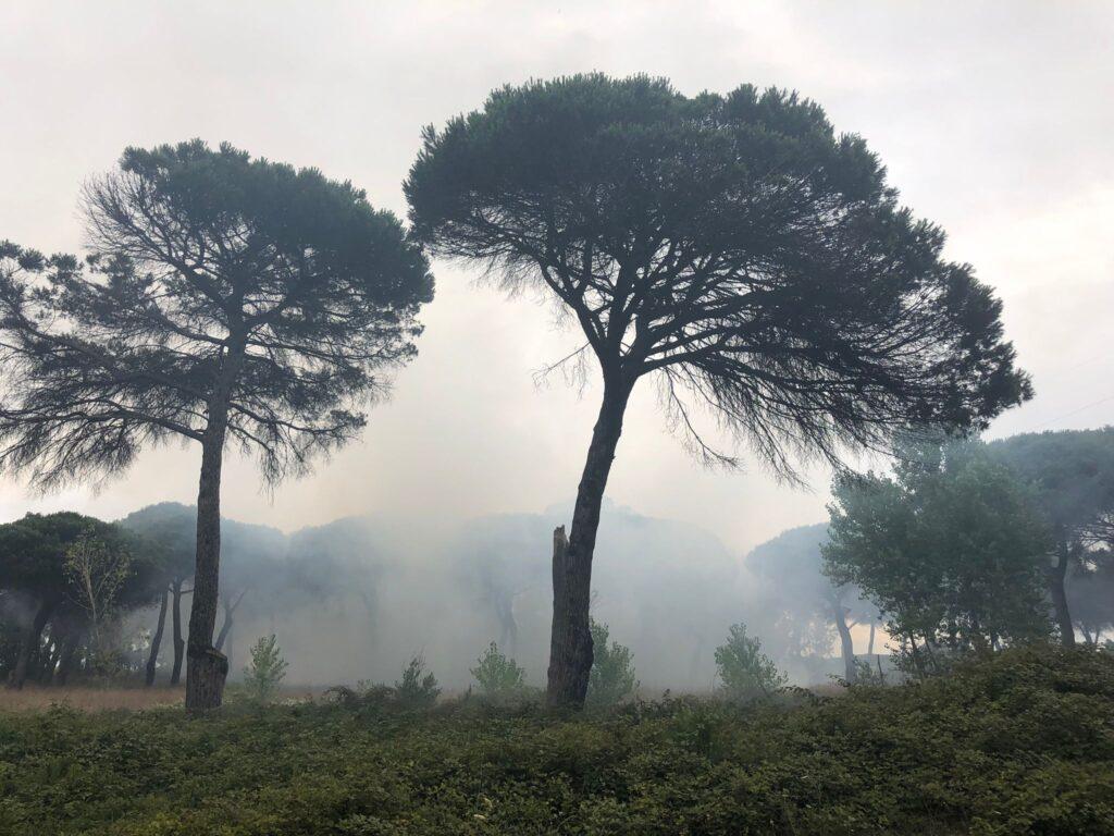 Incendio a Ostia: fumo in città e fiamme nella pineta delle Acque Rosse (VIDEO) 1