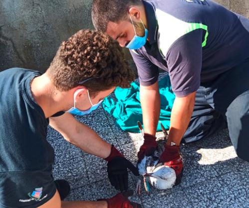 Gabbiani uncinati da ami da pesca salvati a Ostia e Fiumicino 3