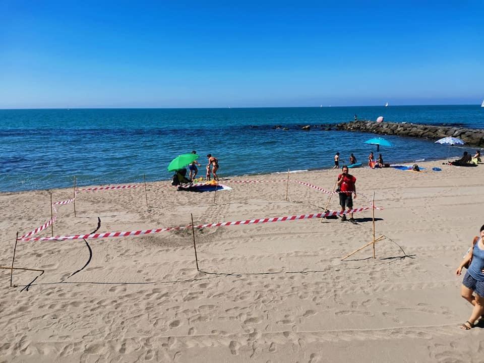 La spiaggia di Ostia scelta ancora una volta da una tartaruga: depositate 103 uova 1