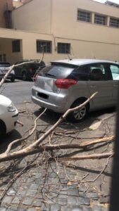 Tragedia sfiorata a Ostia: grosso ramo si schianta sul marciapiede (VIDEO) 2