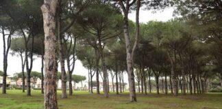 anzio alberi pineta