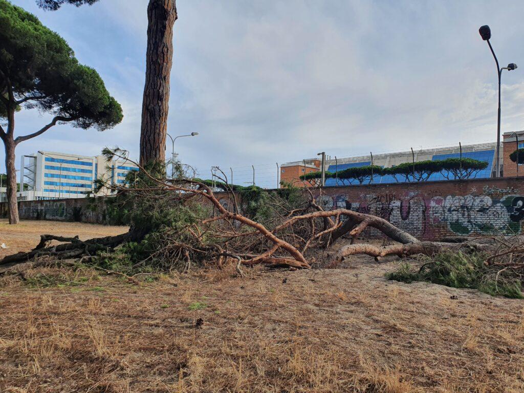Ostia: mattanza di alberi in perfetta salute. La denuncia dei residenti di via Mar Rosso 2