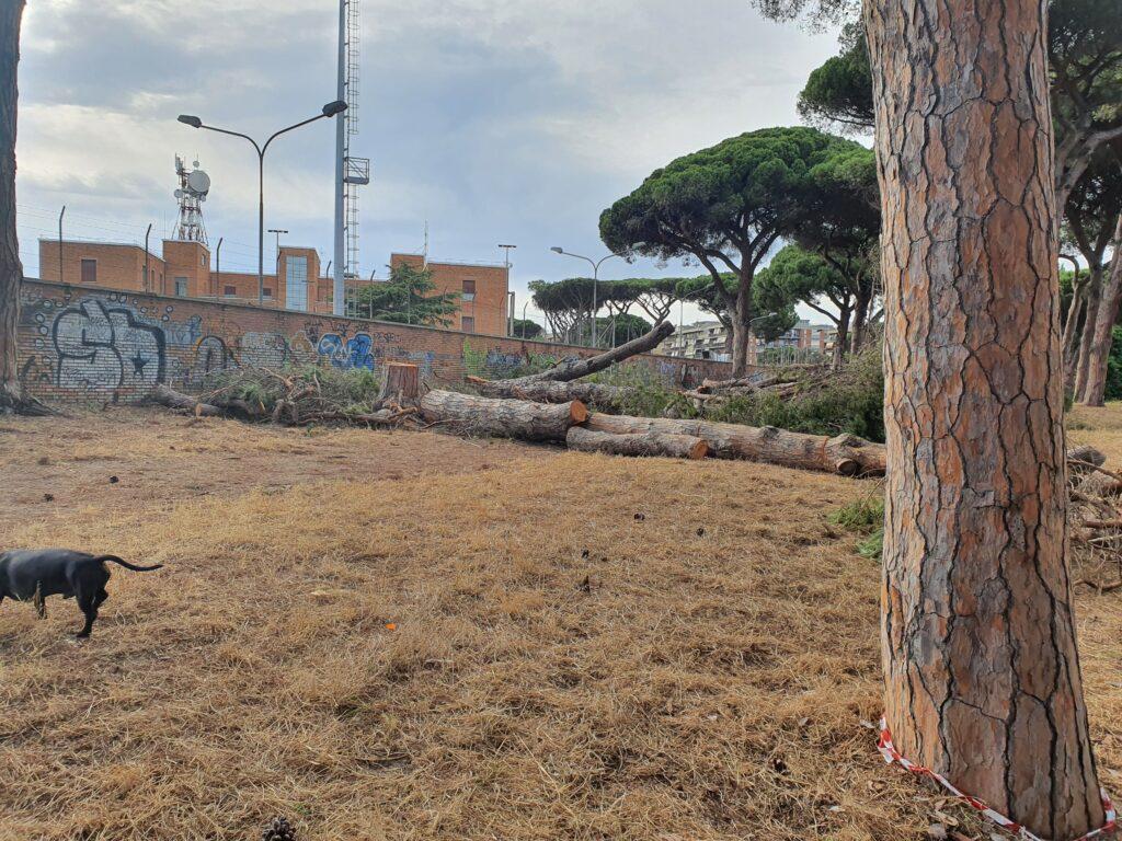 Ostia: mattanza di alberi in perfetta salute. La denuncia dei residenti di via Mar Rosso 1