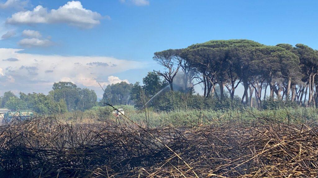 Ostia, danno fuoco alla pineta vicina ai campi sportivi di Totti (VIDEO) 1
