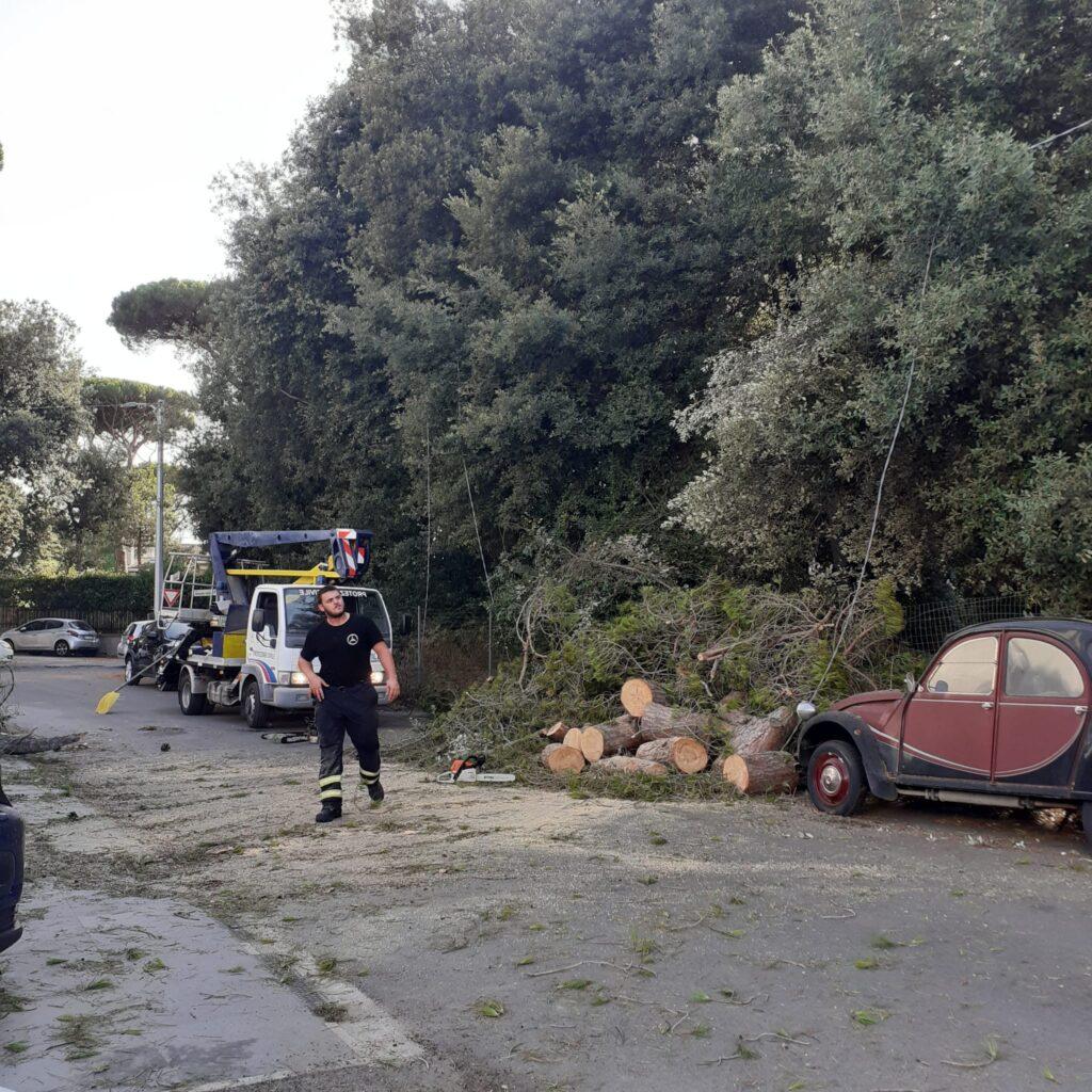 Fregene, grosso pino cade sulla strada: illesi i passanti 1