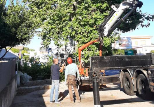 Fiumicino, partono le potature su via Portuense: forti disagi alla circolazione 2