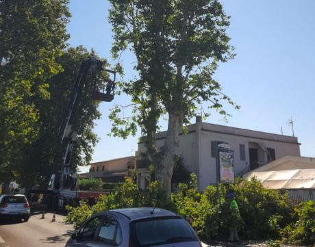 Fiumicino, partono le potature su via Portuense: forti disagi alla circolazione 3