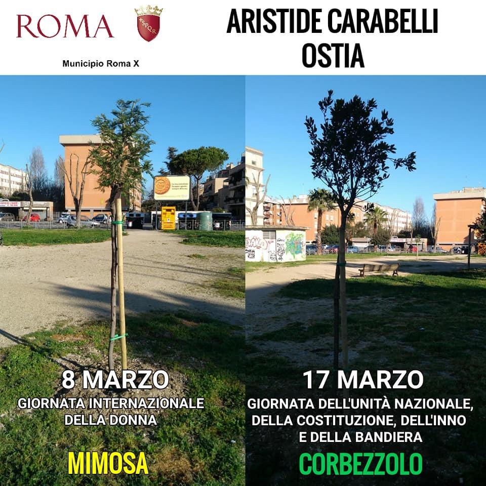 Ostia: il Municipio pianta quaranta alberi ma si dimentica di annaffiarli per mesi 1