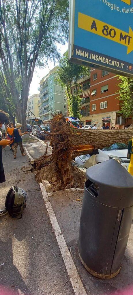 Roma, un grosso albero crolla alla fermata del bus e danneggia tre auto 1