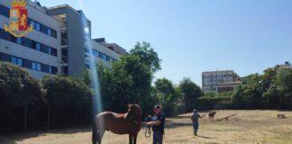 cavalli roma