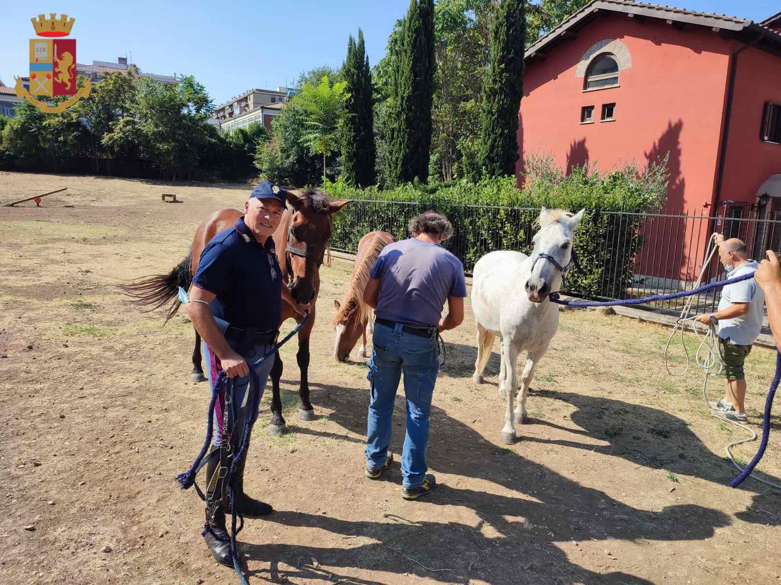 cavalli in strada roma