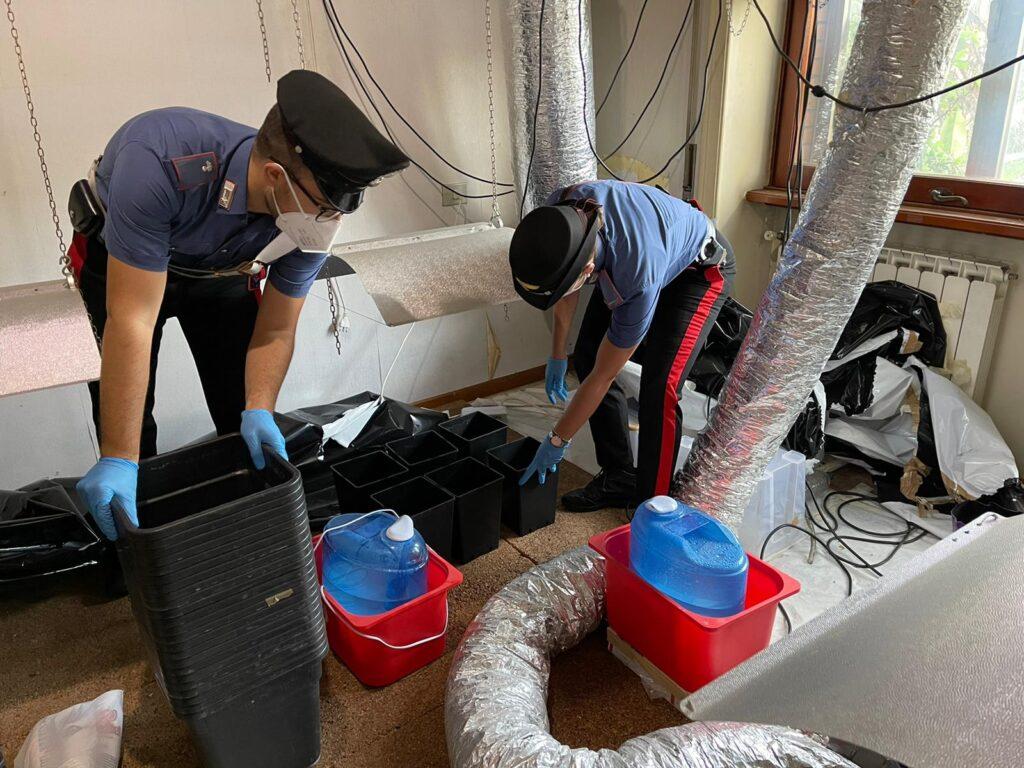 Roma: manomette il contatore dell'energia per alimentare serre di marijuana 1