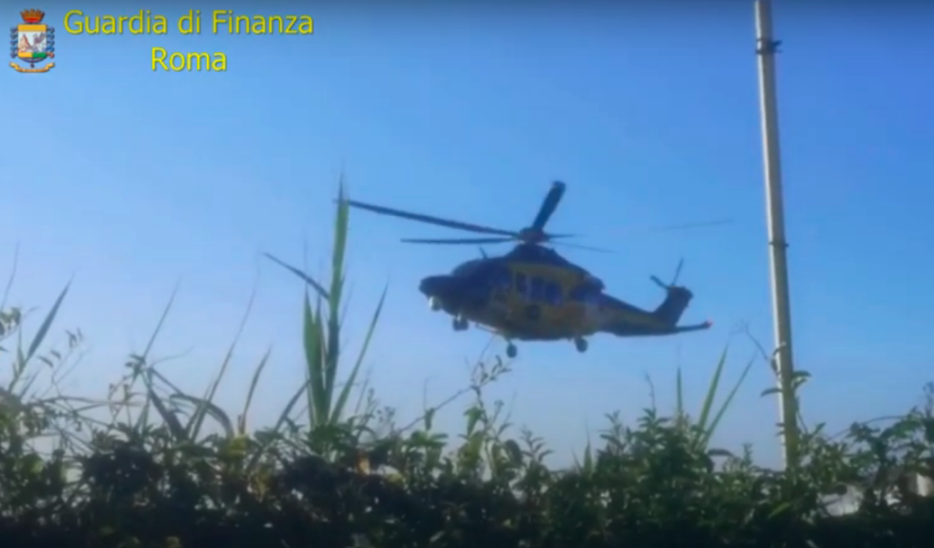Ardea, scoperta piantagione di marijuana: un arresto e 360 kg di droga sequestrata (VIDEO) 1