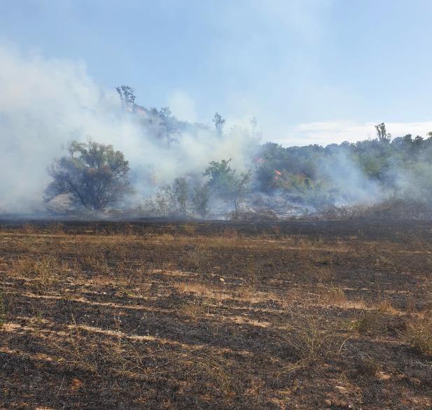 Grave incendio ad Aranova: prende fuoco il bosco di via Crescini. Pericolo per le abitazioni 1