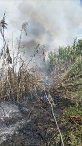 Incendio a Fiumicino, le fiamme hanno lambito le abitazioni di Passo della Sentinella 1