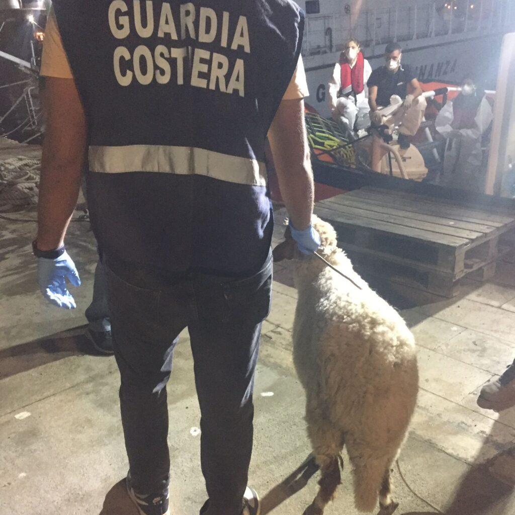A Lampedusa con i migranti sbarca pure una pecora (FOTO) 2