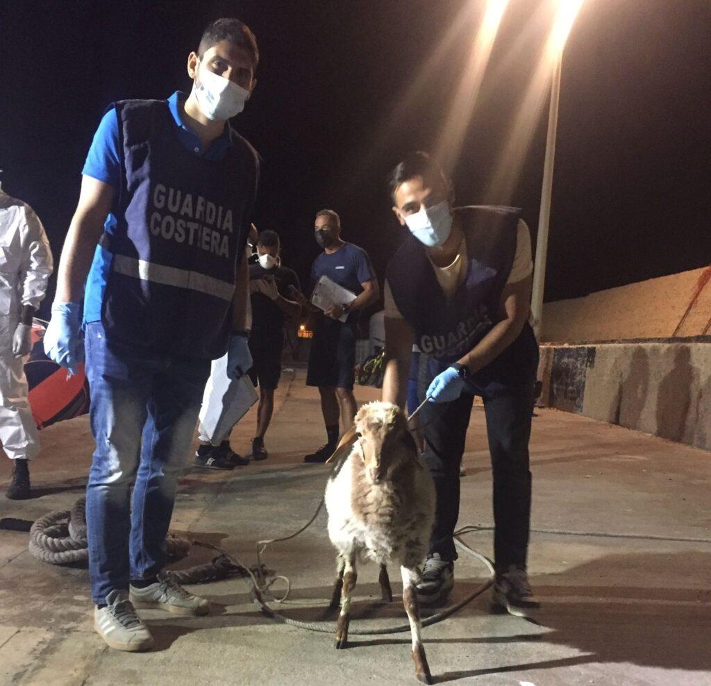 A Lampedusa con i migranti sbarca pure una pecora (FOTO) 1