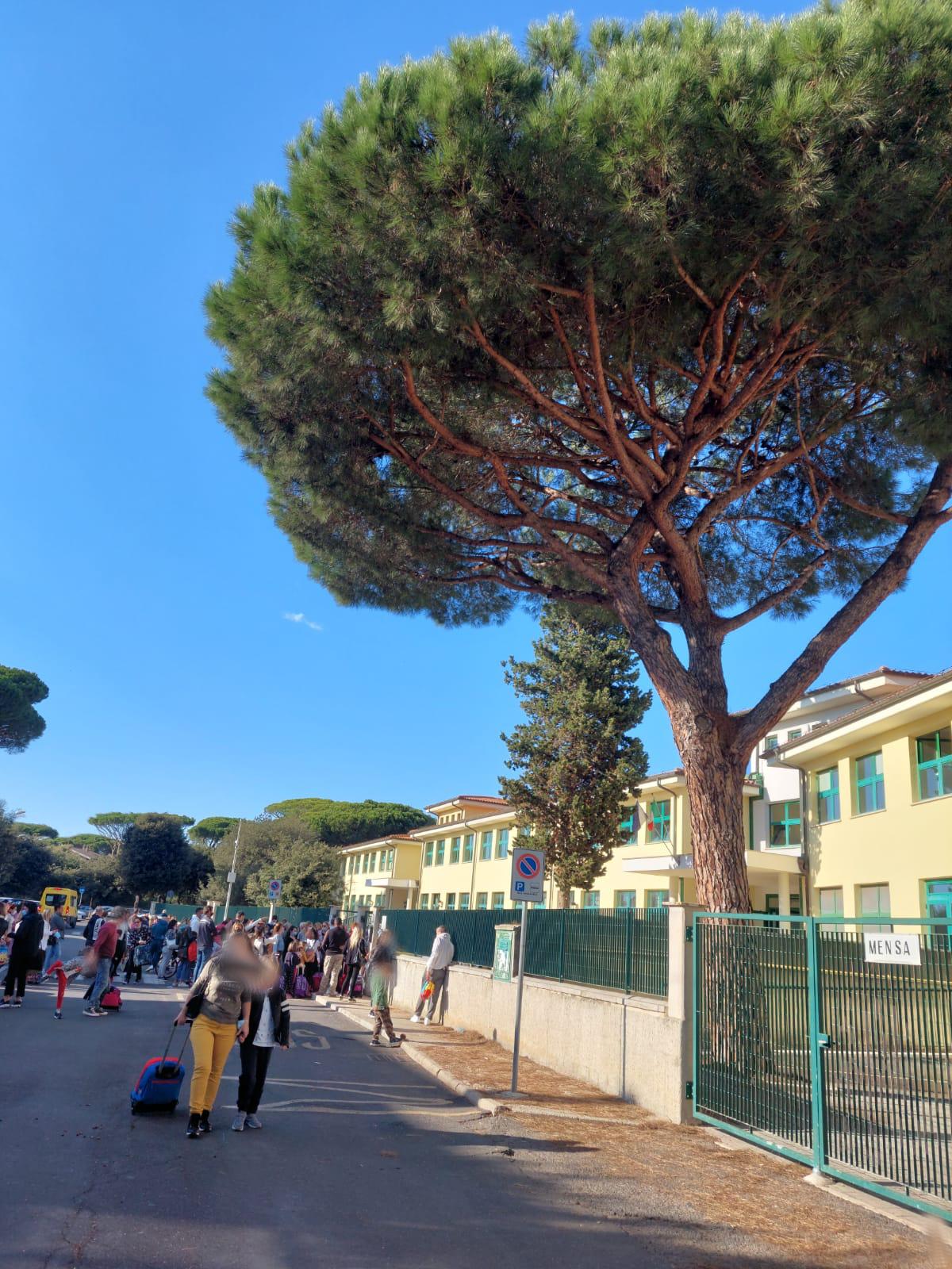 Fregene: pericolo caduta pigne davanti alla scuola. I genitori chiedono un intervento 1